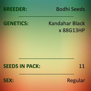 Bodhi Seeds - Deep Line Alchemy 13