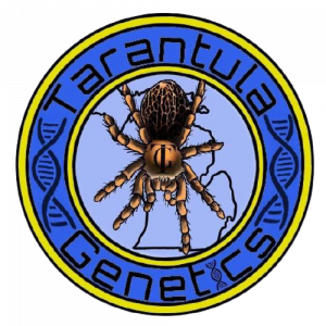 Tarantula Genetics - Cannabis Breeder