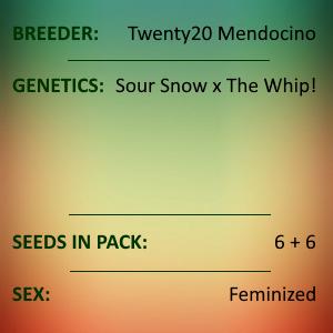 Twenty20 Mendocino - MMXX
